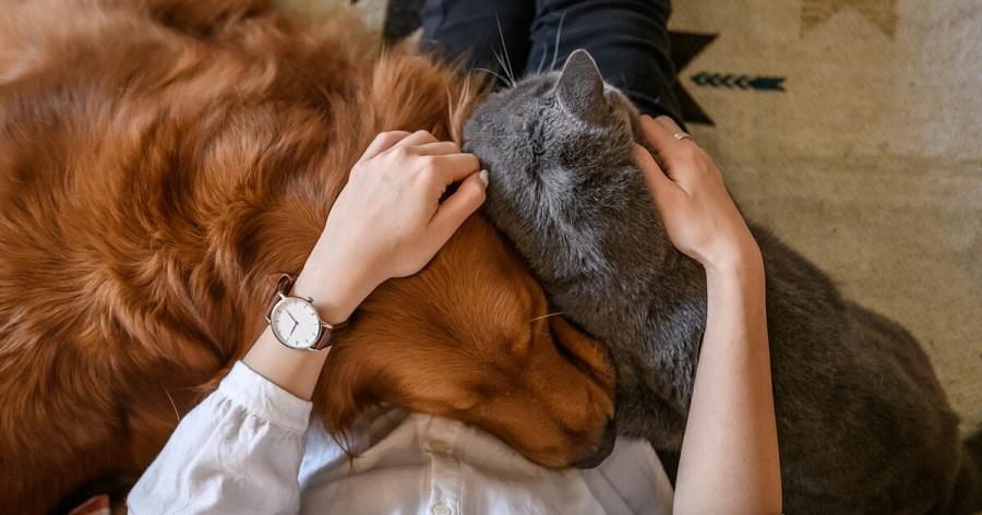 perro gato permiso laboral fallecimiento mascota