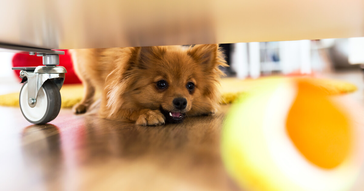 perro libera estres cuarentena coronavirus pelota