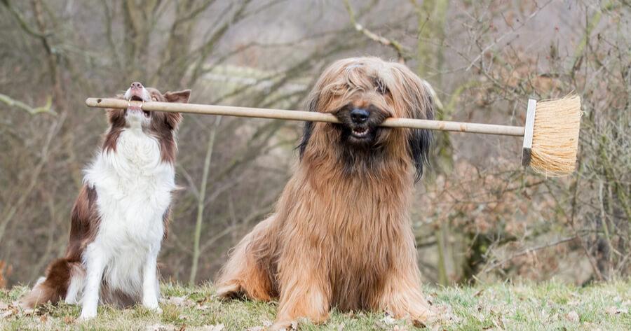 perro pipi ordenanza limpieza municipal
