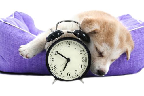 cambio de hora en perros