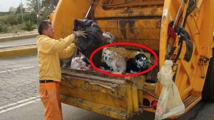 perros tirados al camion de la basura