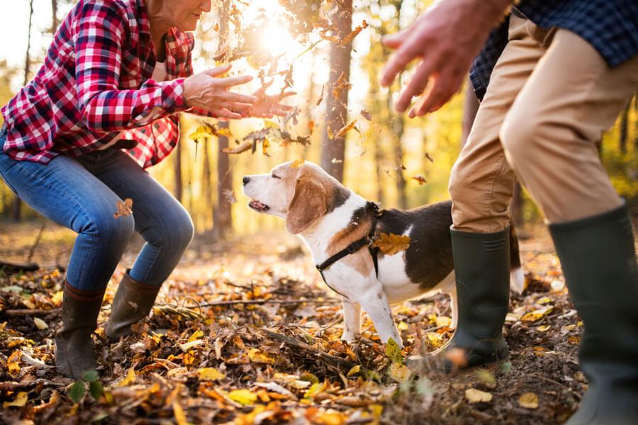 perros otoño juegos