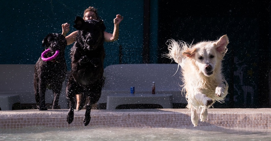 piscina para perros Mister Pet Resor