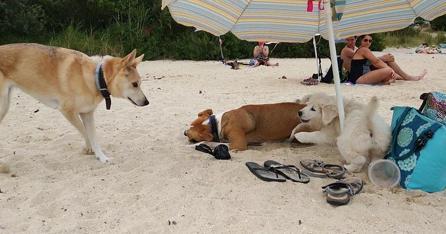 playa de perros o espino pontevedra