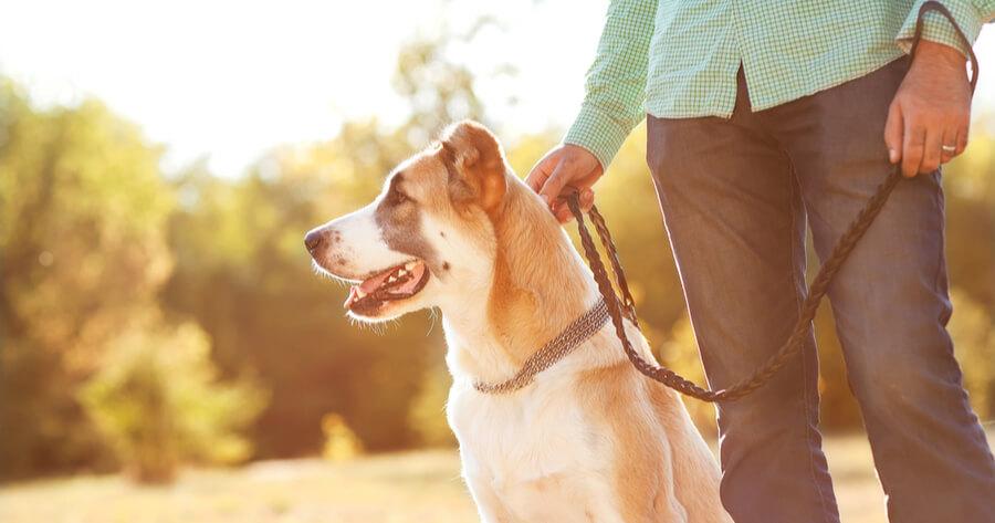 primer paseo perro