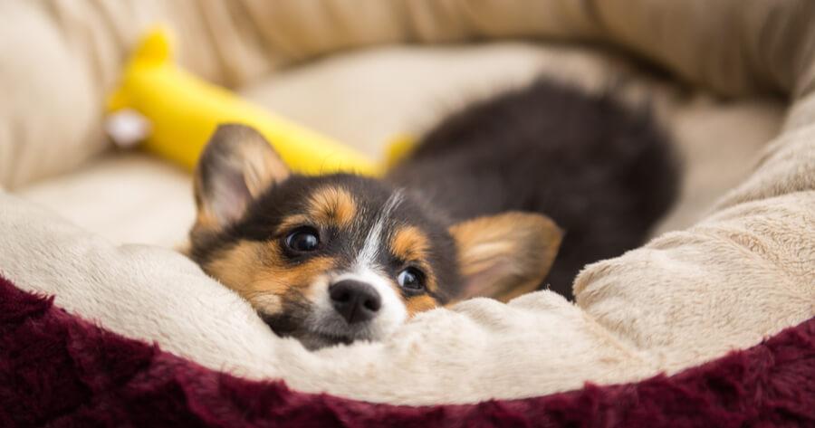 primero noche cachorro cama