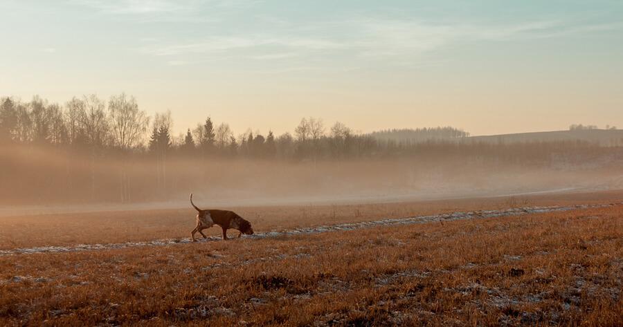 temporada caza 2019 perro pasea monte