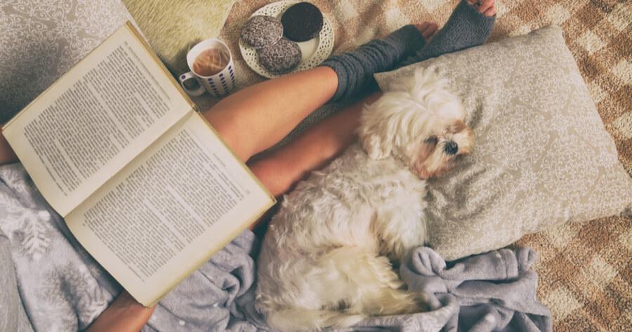 vinculo perro humano