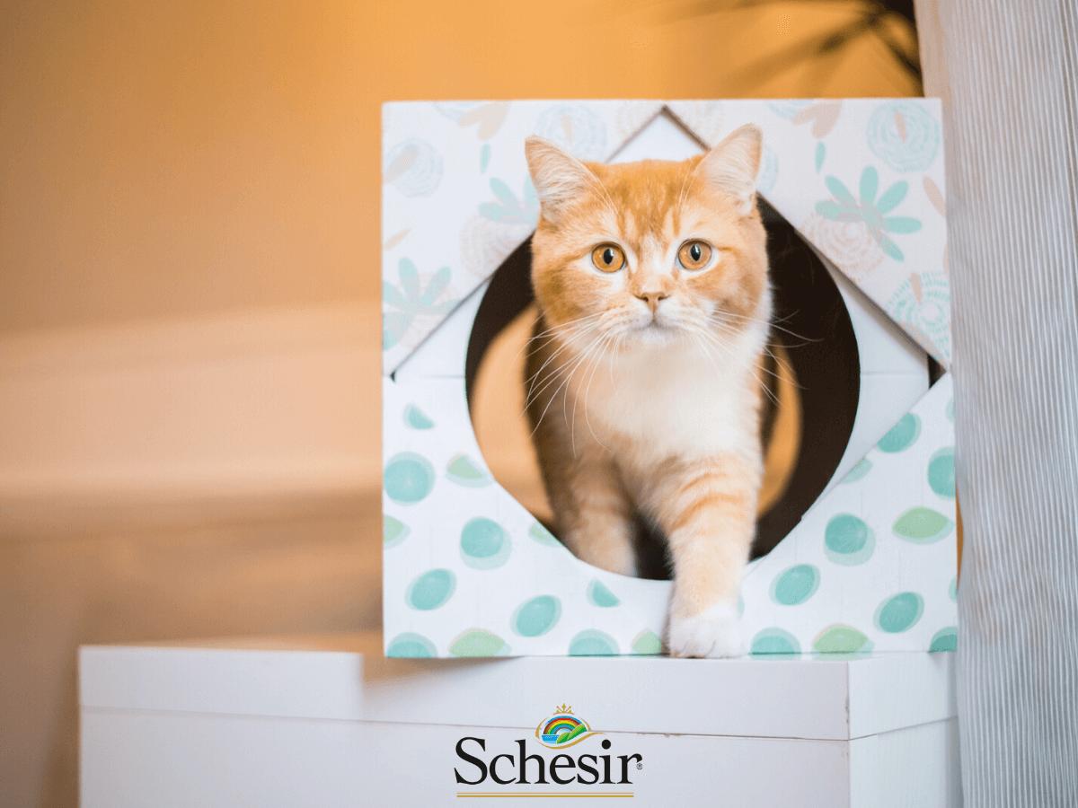 comida schesir para gatos