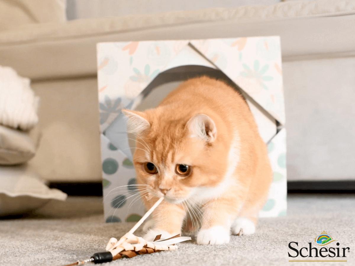 marca schesir gatitos