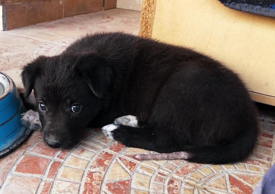 cachorrito de color negro tumbado en el suelo