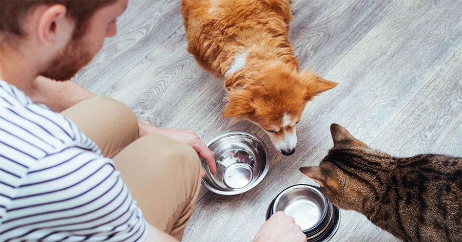 dueño dando de comer a gato y perro