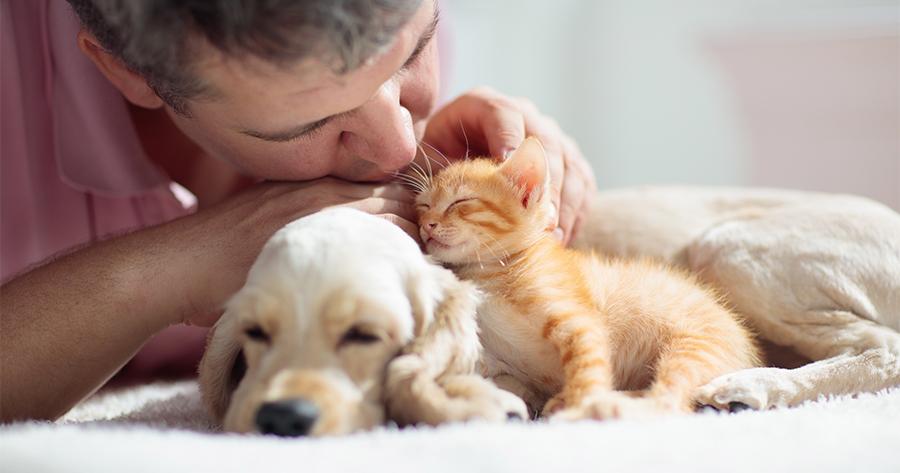 dueño mimando a gato y perro