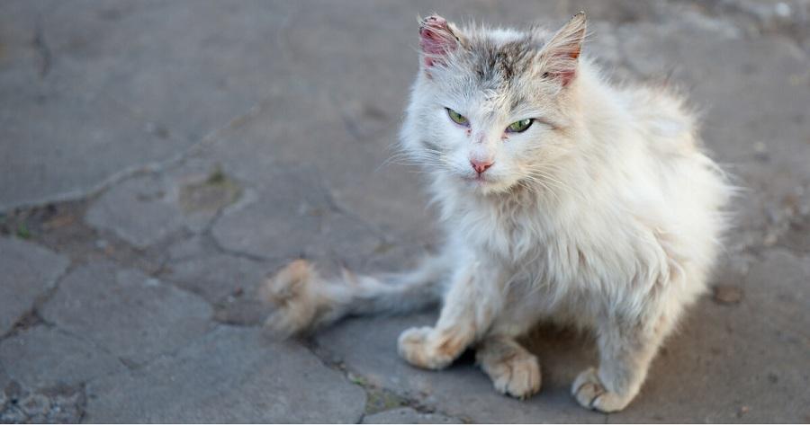 gato abandonado en la calle con el rabo quemado