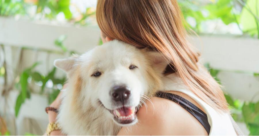 perro abuelo abrazado a una chica