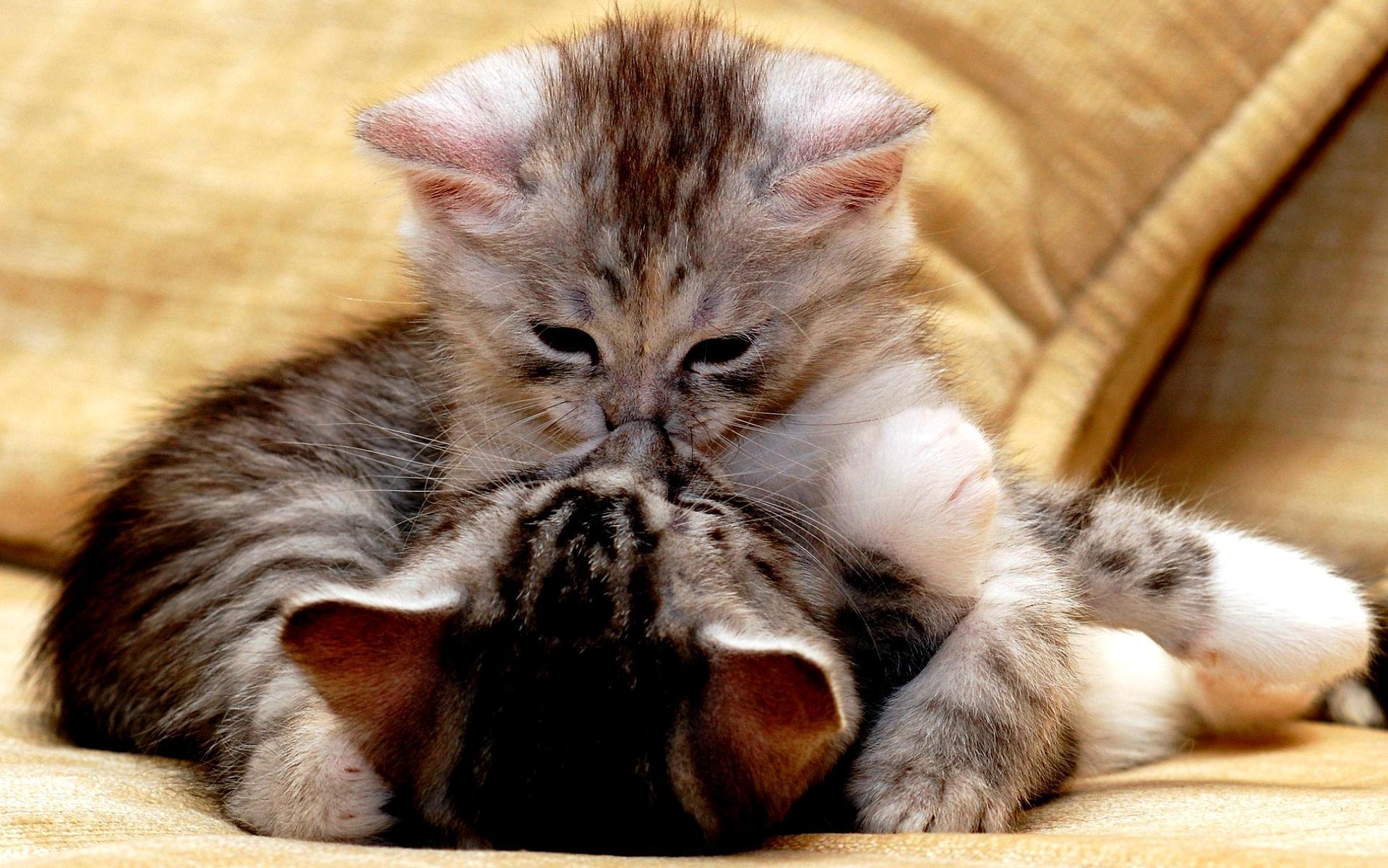beso gatos