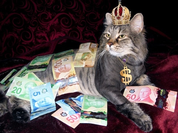 gato cubierto de dólares