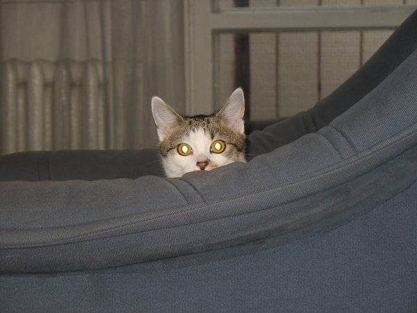 gato escondido detrás del sofá