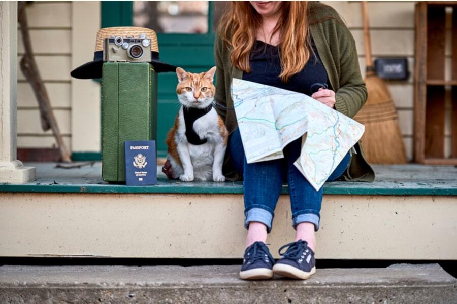 gato de viaje