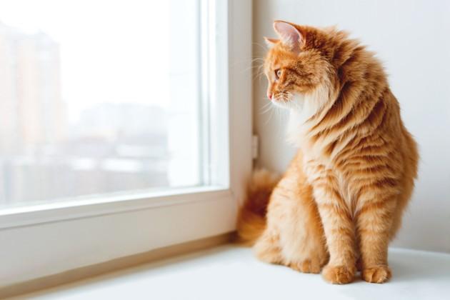 gatto rosso a casa