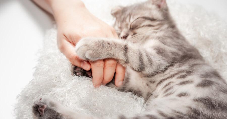 gato durmiendo tranquilamente
