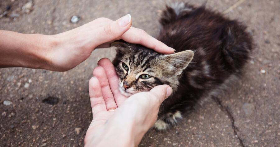 gato envenenado sintomas