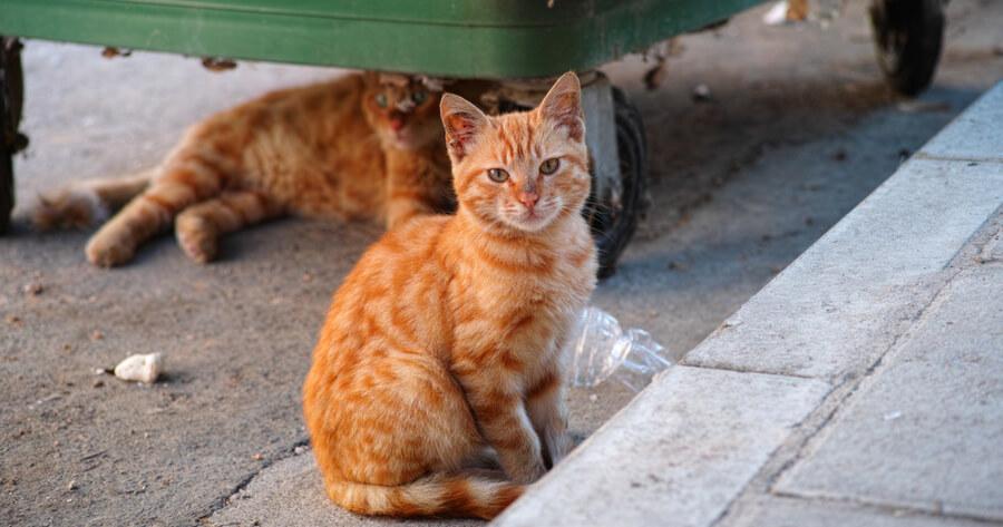 gatos callejeros esperanza vida