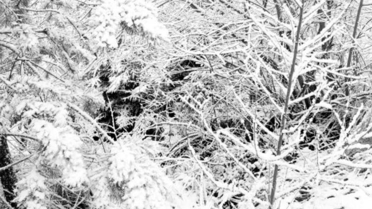 juego labrador blanco nieve