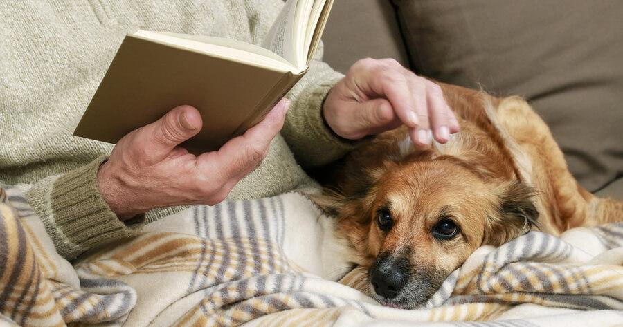 perro con alzheimer amo