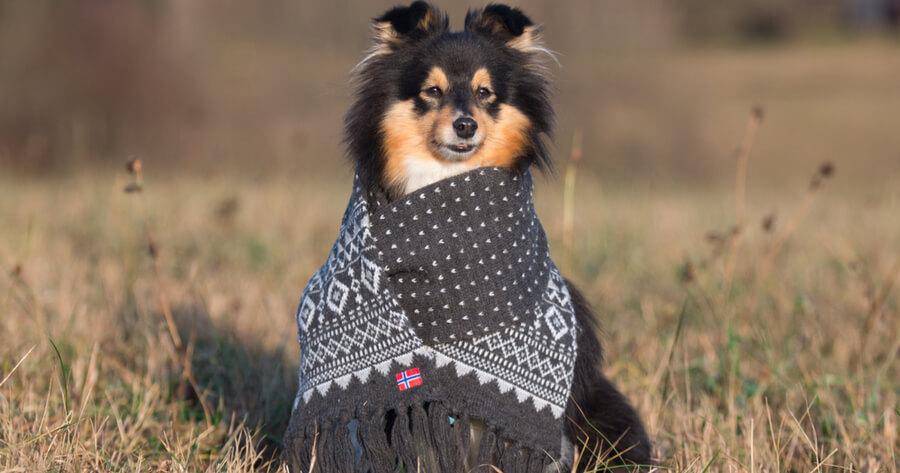 perro batamanta rebajas