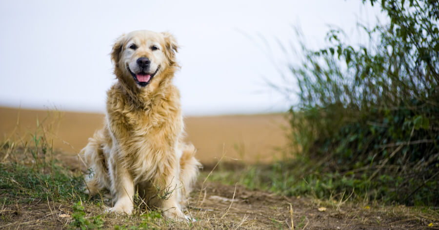 perro mayor paseo