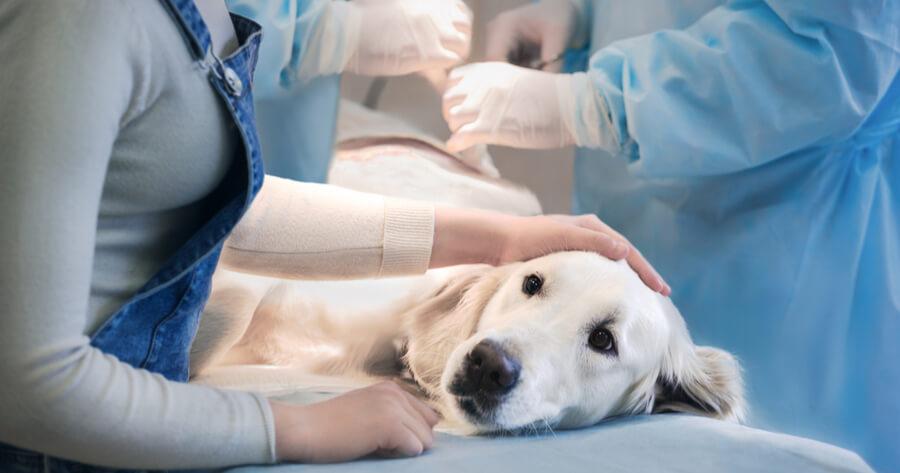 perro operacion