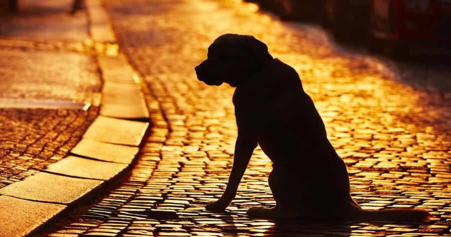 perro perdido calle