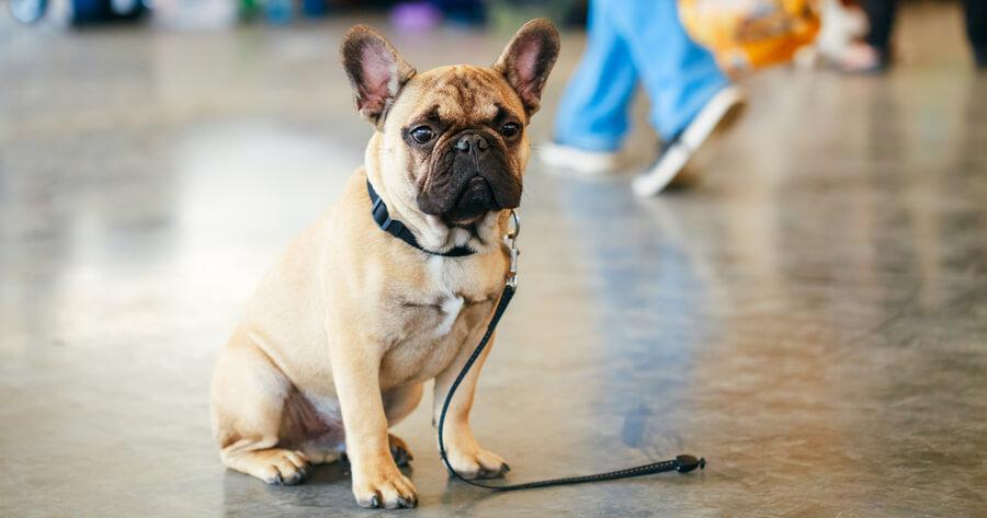 perro perdido aeropuerto