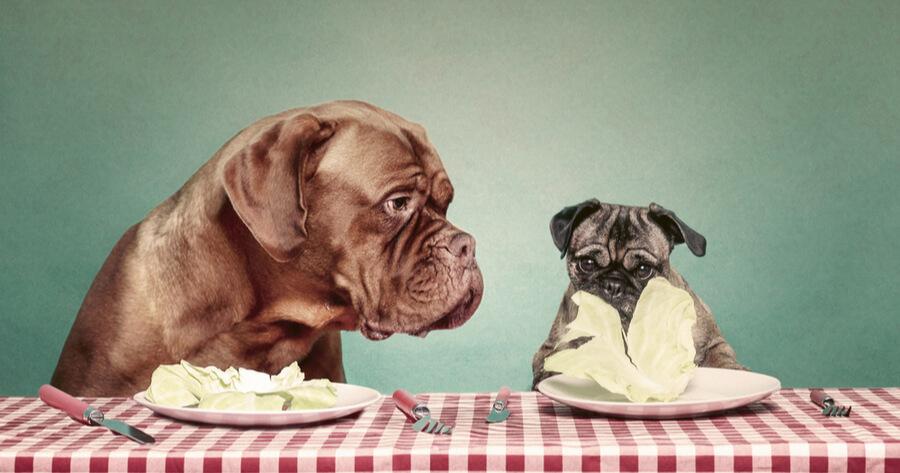 perros celiacos comiendo verduras