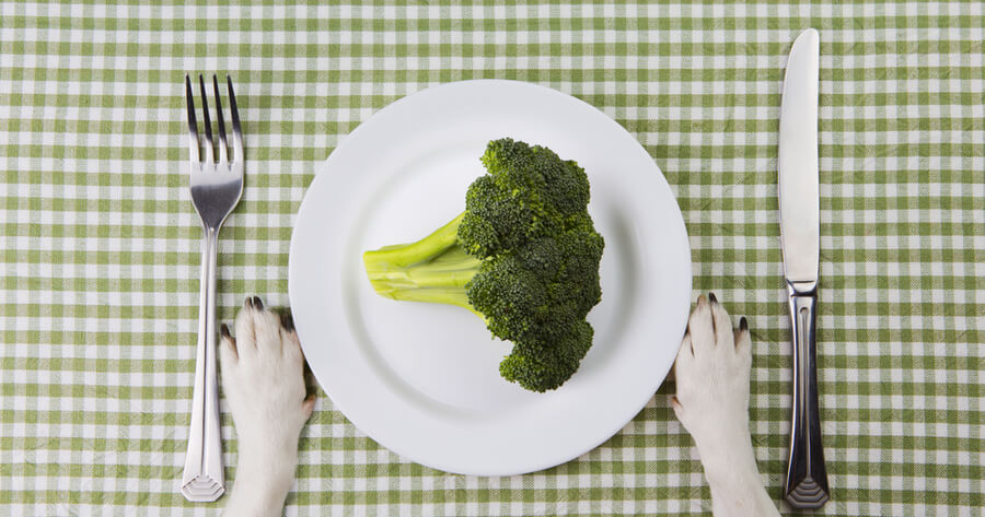 plato brocoli perros