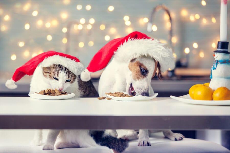 perro y gato comiendo navidad