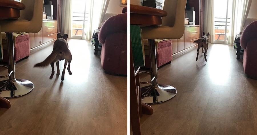 persiguiendo al perro