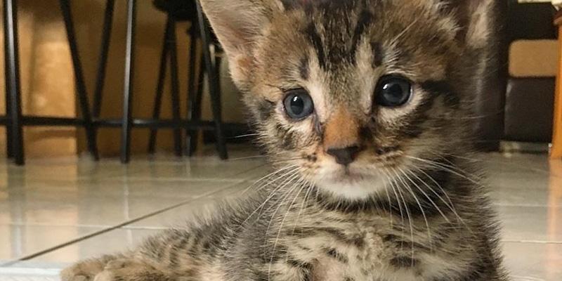 gato paralitico