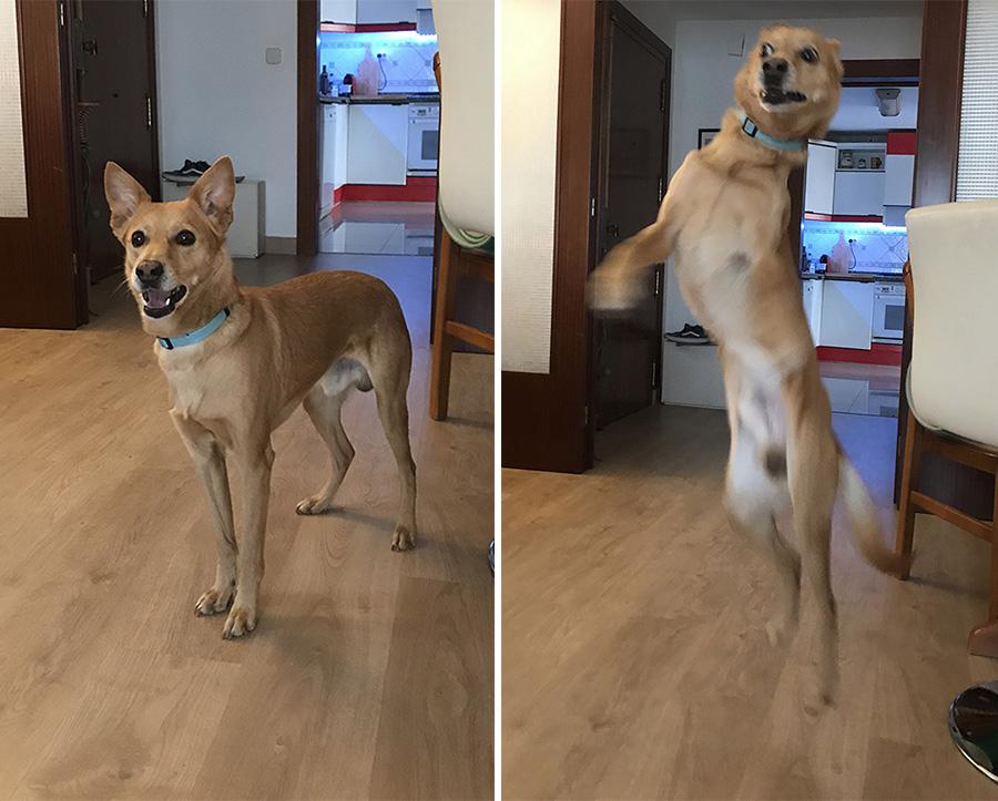 saltos con tu perro