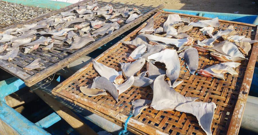 aletas tiburon