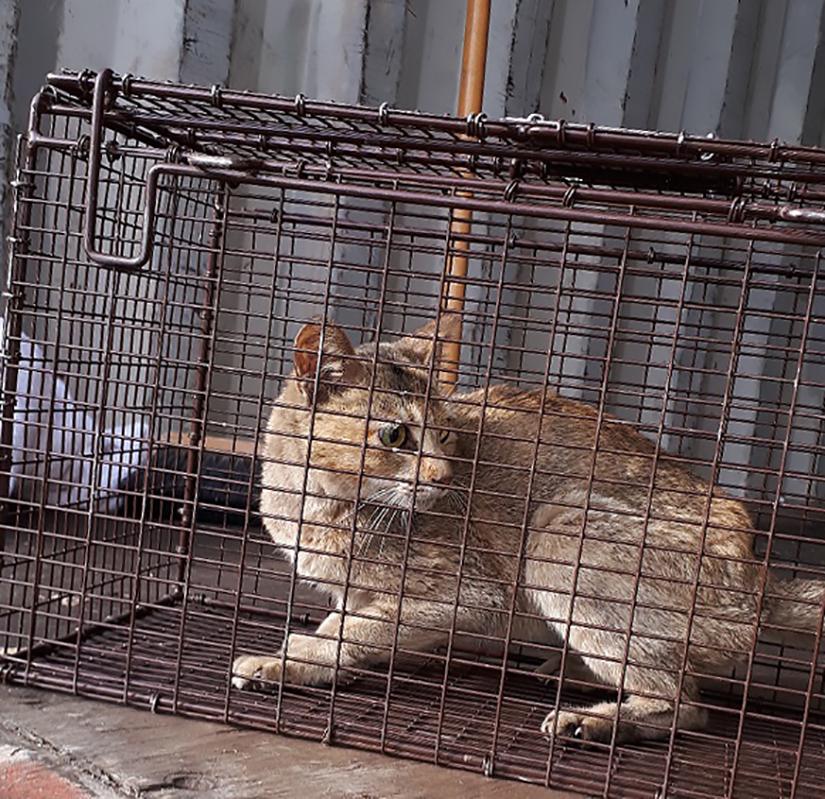 El gato atrapado en un contenedor
