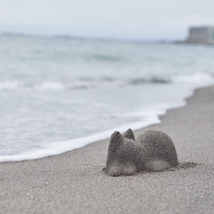 Un gato de arena en la playa