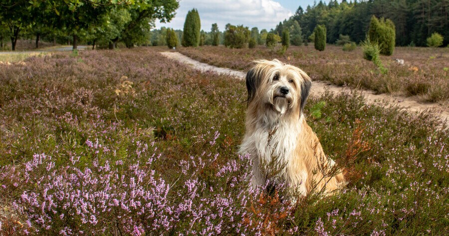 Hund in Lüneburger Heide