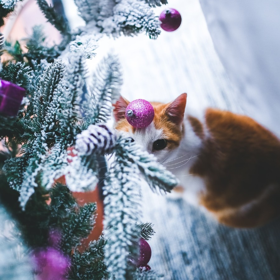 como proteger arbol navidad de gatos