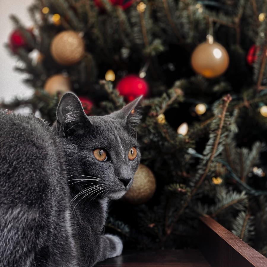 poner arbol de navidad con gatos en casa