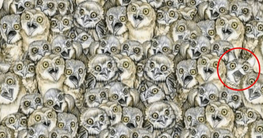 Cat hiding amongst owls