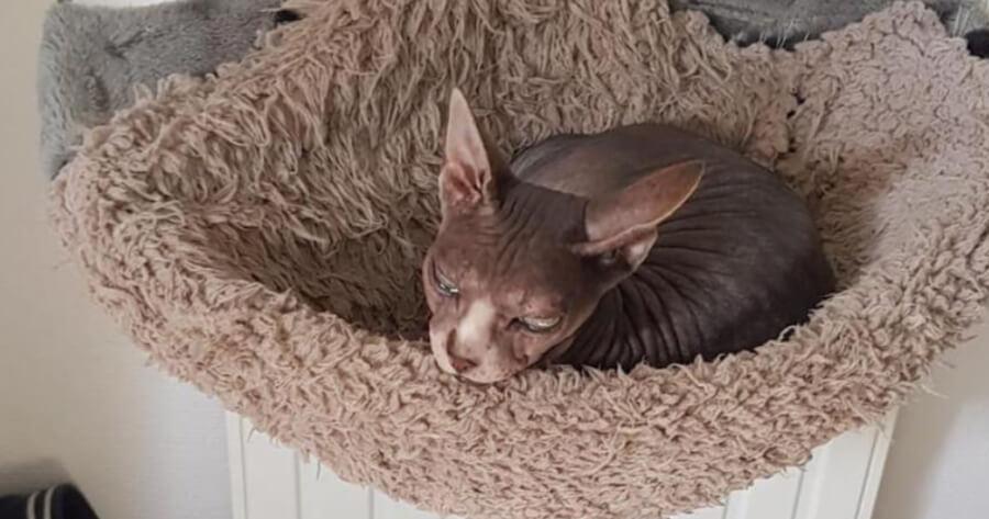 Djoon lying in cat bed