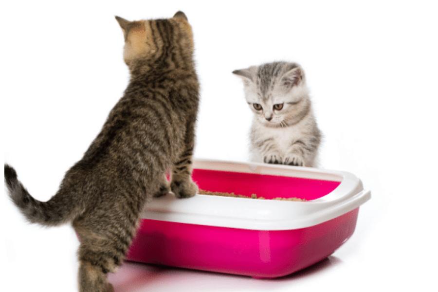 Kitten next to litter tray