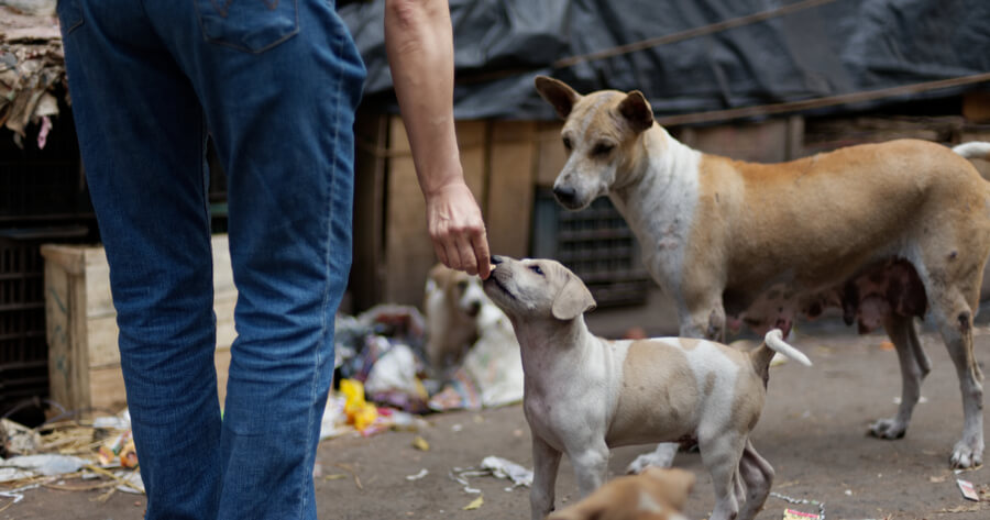person feeding stray dog mum with puppies